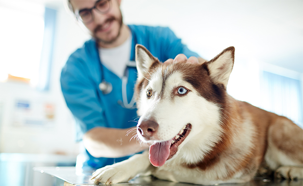 Pet Professionals 1